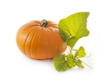 Pumpkin with leaves on white Stock Photo