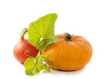 Pumpkin with leaves on white Stock Image