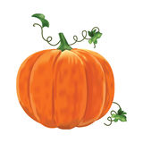 Pumpkin with leaves on a white background. Stock Photos