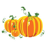 Pumpkin with leaves on a white background. Royalty Free Stock Image