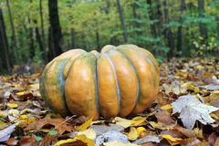 Pumpkin in the Leaves by the Woods Stock Photos