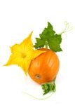 Pumpkin with leaves and yellow flower Royalty Free Stock Photography