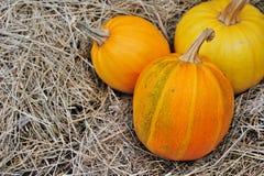 Pumpkin lie on straw Royalty Free Stock Image