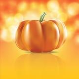 Pumpkin in light Stock Images
