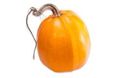 Pumpkin on a light background Stock Image