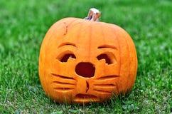Pumpkin like a cat Stock Photo