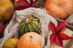 Pumpkin in a linen bag. Autumn time Royalty Free Stock Photo