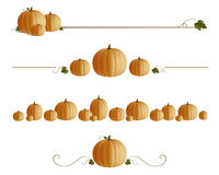 Pumpkin lines Stock Images