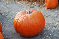 Pumpkin Loner Stock Image