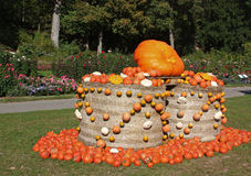 Pumpkin in Ludwigsburg,Germany. Fair of pumpkins in the garden in Ludwigsburg Royalty Free Stock Photos