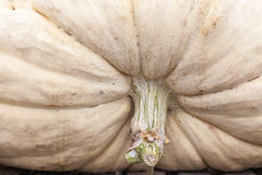 Pumpkin in Ludwigsburg,Germany Stock Image