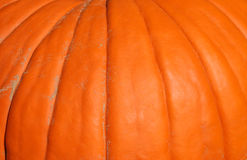 Pumpkin, macro Stock Images