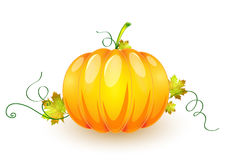 Pumpkin made in illustrator cs4 Stock Photography