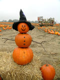 Pumpkin Man. An interesting combination of snowman and jack o' lantern, in a field of pumpkins Royalty Free Stock Images