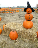 Pumpkin Man. An interesting combination of snowman and jack o' lantern, in a field of pumpkins, sitting on a bale of hay Royalty Free Stock Photo