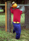 Pumpkin Man. Figure of man made with pumpkins in hat and low-rider jeans royalty free stock photo