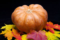 Pumpkin and many red maple leaves on dark background Royalty Free Stock Image