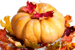 Pumpkin and many red maple leaves on white background Stock Images
