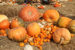 Pumpkin. Many sizes of pumpkin on the straw Stock Images
