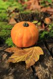 Pumpkin and maple leaf Stock Images