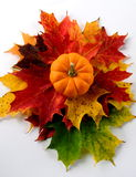 Pumpkin and Maple leaves. This is a picture of a thanksgiving centerpiece of maple leaves and a punmkin that has been isolated Royalty Free Stock Photo