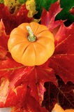 Pumpkin and Maple leaves Stock Photo