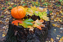 Pumpkin and maple leaves in autumn forest on stump Stock Photography