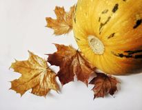 pumpkin maple leaves autumn still_life food healthy white background vegetable Royalty Free Stock Photo