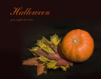 Pumpkin and maple leaves Royalty Free Stock Images