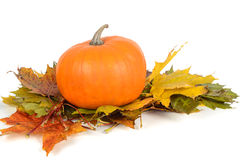 Pumpkin on the maple leaves Stock Images