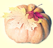 Pumpkin and maple leaves,with a retro effect Stock Photography