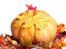 Pumpkin and maple leaves on white background Royalty Free Stock Photos