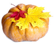 Pumpkin and maple leaves on white background Stock Images