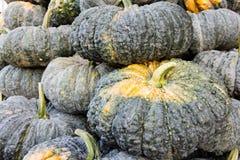 Pumpkin in market Royalty Free Stock Image