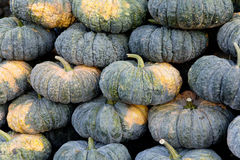 Pumpkin in market Royalty Free Stock Photography