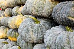 Pumpkin in market Stock Image