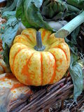 Pumpkin on a market stall Stock Images