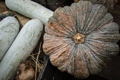 Pumpkin. In the market,Thai fruit Stock Photography