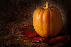 Pumpkin on matting background Royalty Free Stock Photography