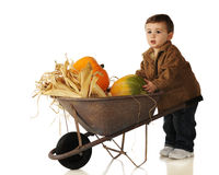 Pumpkin, Mine Royalty Free Stock Photo