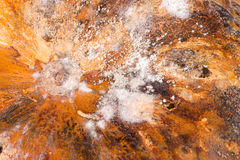 Pumpkin with mold as a background close-up macro stock images