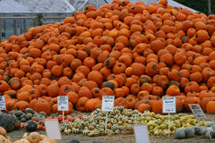 Pumpkin Mountain royalty free stock images
