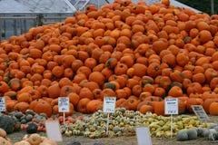 Pumpkin Mountain Royalty Free Stock Images