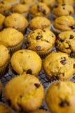 Pumpkin Muffin Stock Images