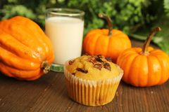 Pumpkin muffin Stock Photos