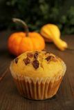 Pumpkin muffin Stock Images