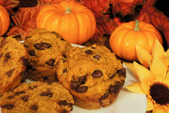 Pumpkin muffins. Fresh pumpkin chocolate chip muffins with pumpkins and autumn leaves in the background Stock Image