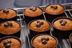 Pumpkin Muffins with Chocolate on the Rack for Cooling royalty free stock image