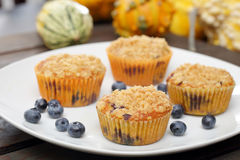 Pumpkin muffins with cranberries on the plate Royalty Free Stock Photo