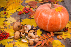 Pumpkin, mushrooms, rowanberry and maple leaves on old wooden ta Royalty Free Stock Images